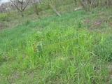 Земельный участок 8 соток (СНТ, ДНП)